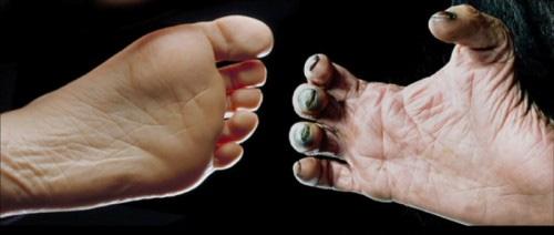 Bàn chân của người và tinh tinh