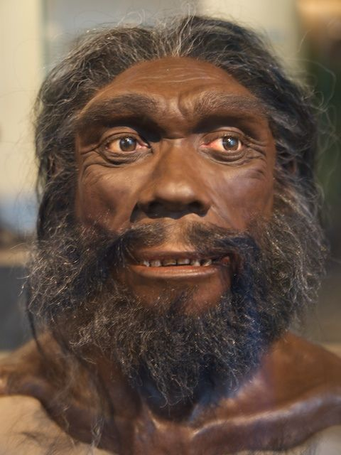 Người Heidelberg cao tới 1,8 mét và có nhiều cơ bắp hơn tôt tiên loài người ngày nay,