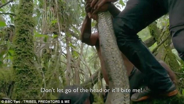 Đây là loài động vật ăn thịt nguy hiểm nhất rừng Amazon nhưng người Waorani tin rằng chúng là linh vật đem lại cho họ sức mạnh.
