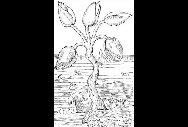 Tranh vẽ cây barnacle.