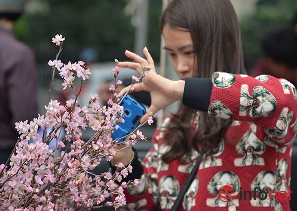 Nhiều người đã không bỏ qua cơ hội để được tận thấy những bông hoa anh đào vốn đã trở thành biểu tượng của đất nước Mặt trời mọc.