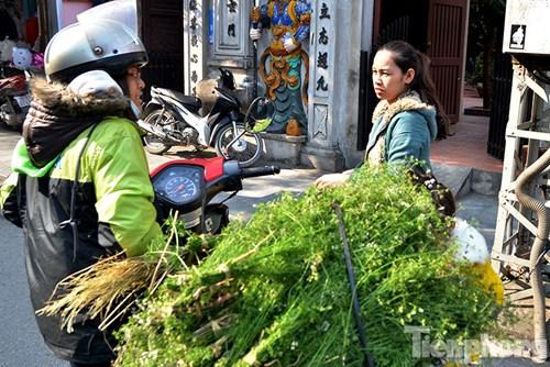 Những hàng rau mùi có mặt trên các tuyến phố.