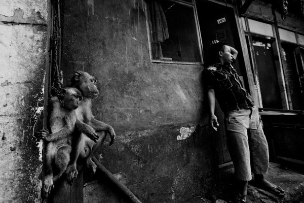 Cặp khỉ cùng vị chủ nhân tại làng Kampung Cipinang Besar.