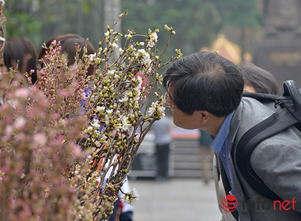 Nhiều du khách người Nhật Bản rất bất ngờ và tỏ ra thích thú khi được tận hưởng hương thơm cũng như vẻ đẹp của hoa anh đào ngay giữa lòng Hà Nội.
