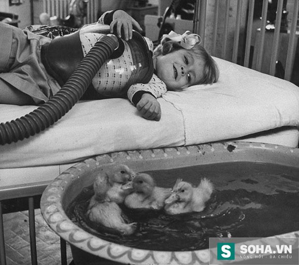 Năm 1956, động vật được đưa vào bệnh viện và trở thành liệu pháp điều trị hữu hiệu