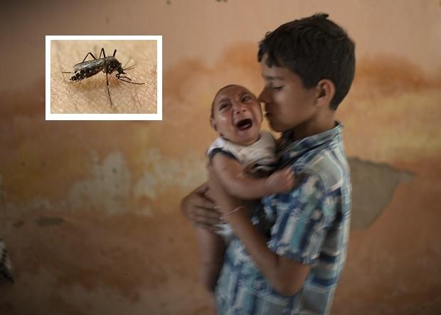 Đại dịch do virus Zika gây ra ở Brazil, phải chăng xuất phát từ sự cẩu thả trong việc phát tán muỗi biến đổi gen?
