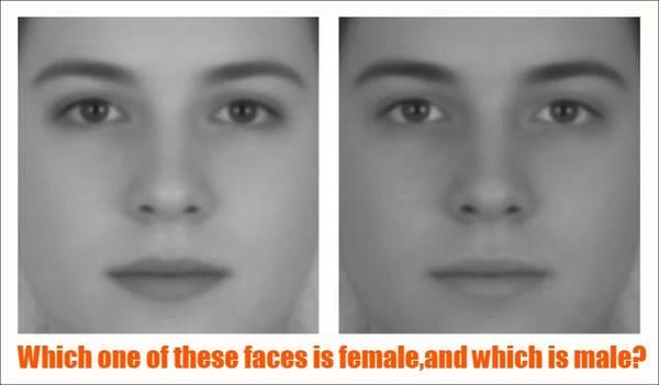 Bức ảnh nào là phụ nữ? Bức nào là đàn ông?