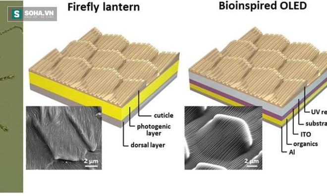 Cấu trúc phân lớp bất đối xứng trong bộ phận phát sáng.