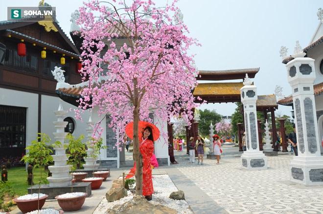 Thiếu nữ Việt trong bộ đồ Kimono truyền thống làm duyên bên hoa anh đào