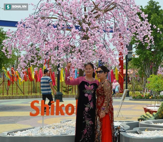 Các phụ nữ trung niên cũng vô cùng hào hứng với hoa anh đào Nhật Bản