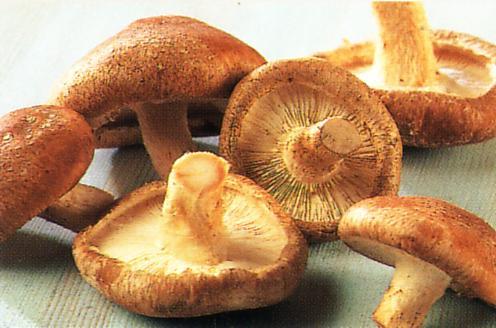 Người Trung Quốc đã biết sử dụng nấm hương từ thời Xuân thu Chiến quốc