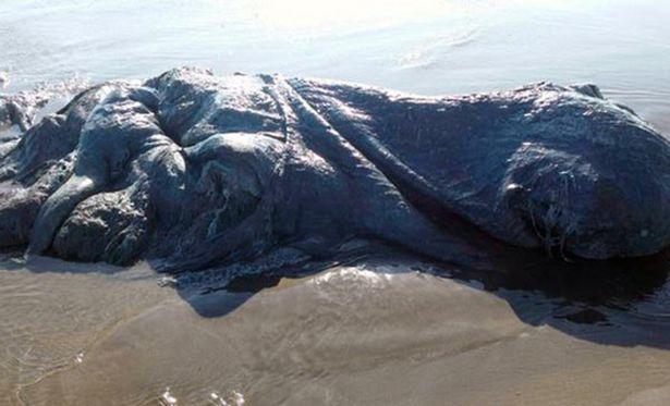 Không rõ con thủy quái là loài sinh vật gì.