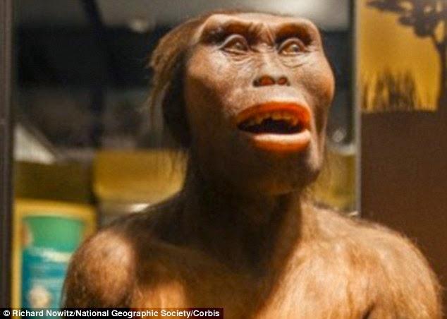 Giới khoa học tin rằng trong quá trình tiến hóa, phần hàm và răng của con người ngày càng nhỏ gọn hơn. Tuy nhiên, khác với những hóa thạch cùng thời đại, phần răng của Penghu lại dày và có răng hàm lớn, cho thấy nó thuộc một nhóm khác.