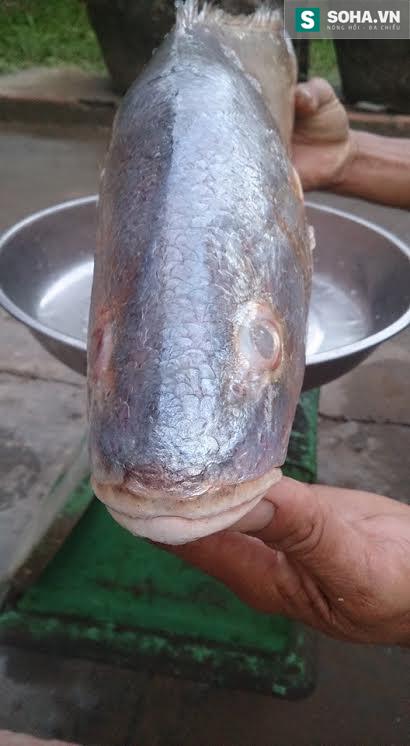 Phần đầu của cá