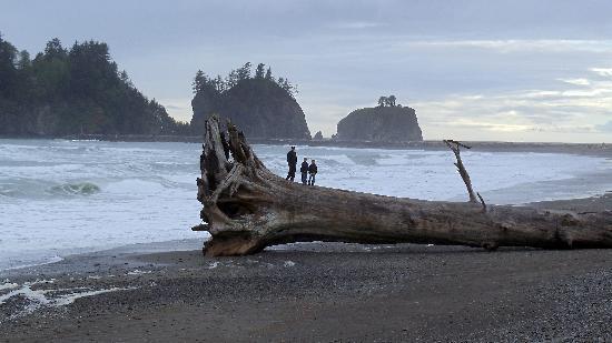 Cây gỗ khổng lồ.