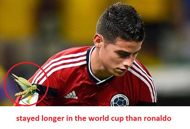 Đến chú châu chấu còn ở lại World Cup lâu hơn Ronaldo