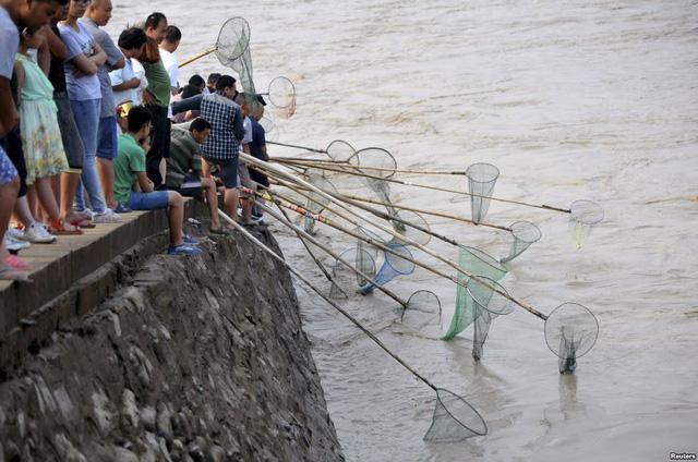 Người dân tập trung bắt cá dọc bờ sông Hoàng Hà gần đập thủy điện Sammenxia đang xả lũ tại Bình Lục, tỉnh Sơn Tây, Trung Quốc.