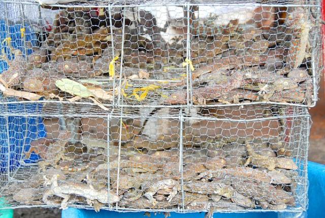 chợ, côn-trùng, Tịnh-Biên, Việt-Nam, tắc-kè, rắn, rắn-mối, bọ-rầy