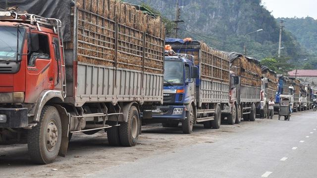 Những xe chở dưa hấu nối dài trước cửa khẩu Tân Thanh. (Ảnh: Quang Thế/Tuổi Trẻ)