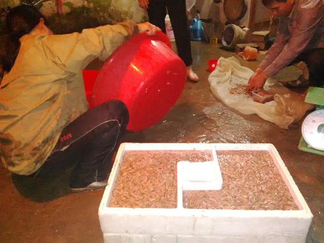 Sau khi để rao nước, Rươi được đưa vào một khay xốp chuyên dụng để bảo quản