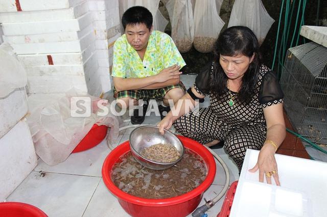 Bà Oanh trực tiếp chọn những mẻ rươi chất lượng cho những khách hàng quen thuộc.