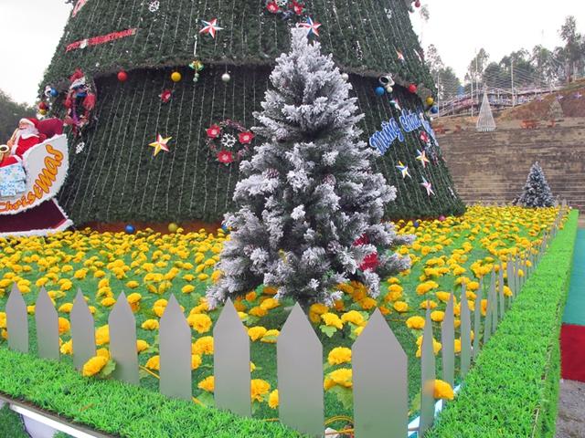 Ở phần đế cây thông, người dân làm thành 1 thảm cỏ và hoa nhân tạo với hơn 16000 tấm cỏ cùng hoa, tương đương 200 mét vuông cỏ nhựa làm đế.
