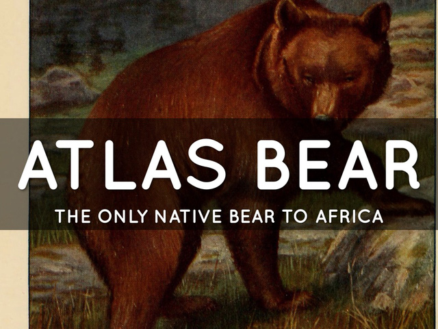 Loài gấu sống ở châu Phi