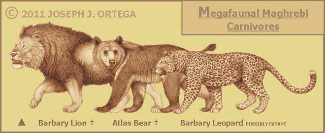Kích thước so với báo và sư tử