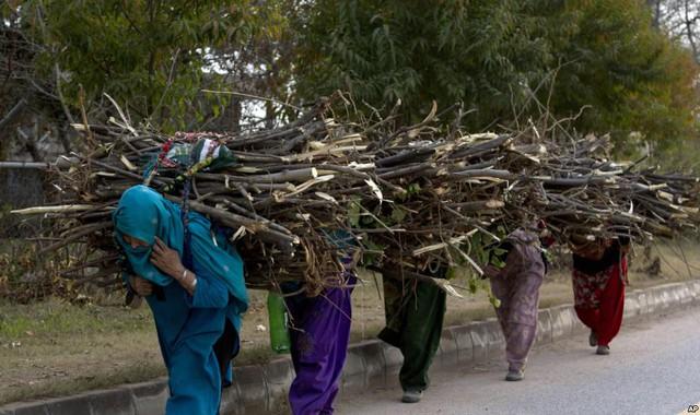 Phụ nữ kiếm củi để làm nhiên liệu nấu nướng và sưởi ấm ở Islamabad, Pakistan.
