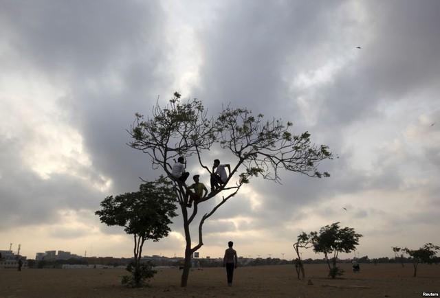 Các cậu bé ngồi chơi trên cây giữa cánh đồng rộng ở Karachi, Pakistan.