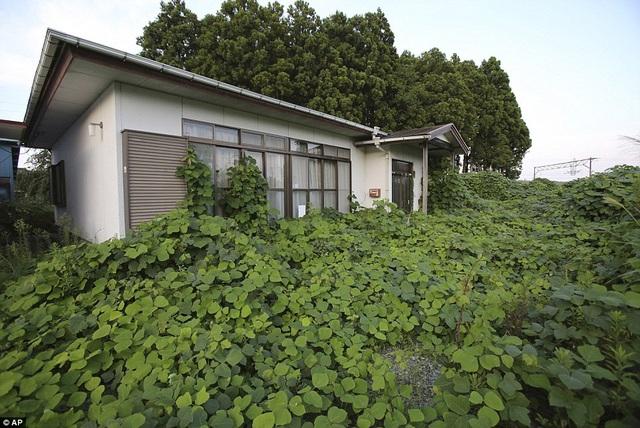 Cỏ dại mọc xung quanh một ngôi nhà tại Fukushima.