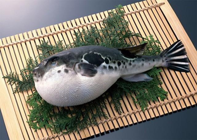 Cá nóc Nhật Bản là một trong những đặc sản có thể gây chết người. Ảnh Internet
