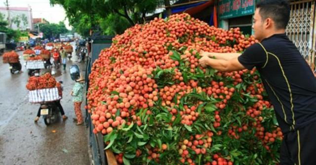 Vải thiều sẽ được phép bán tại các quầy lưu động tại Hà Nội.