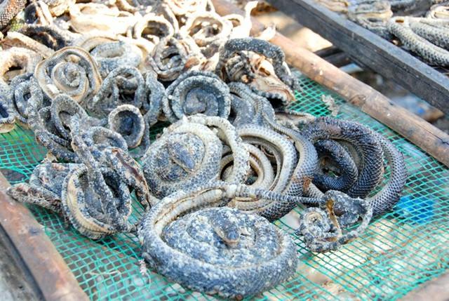 Da và đầu rắn được tận dụng để bán cho các hộ nuôi cá, ruột bán cho dân nhậu. Đặc biệt xương rắn phơi khô bán giá 30.000 đồng/kg cho các lò nấu cao. Ảnh: Zing