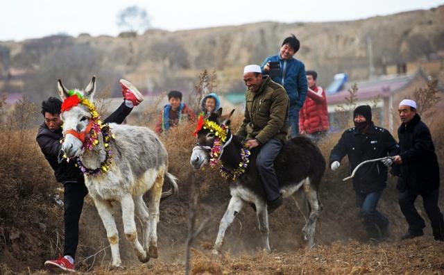 Những người nông dân tham gia một cuộc đua lừa tại Hải Nguyên, Khu tự trị dân tộc Hồi Ninh Hạ, Trung Quốc.