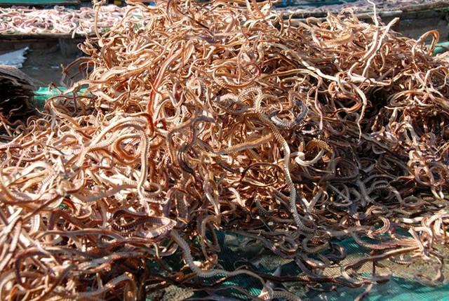 Ngoài lấy thịt làm khô, người dân ở đây còn làm các loại rắn nguyên con phơi khô, với giá bán từ 200.000 đến 300.000 đồng/kg, chủ yếu phục vụ ngâm rượu. Ảnh: Zing