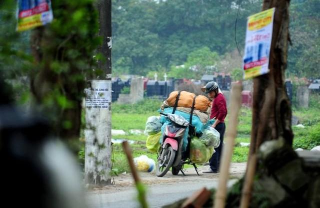 Nhiều người bán cho các lái buôn rau để mang đi bán tại các chợ trong khu vực nội thành.