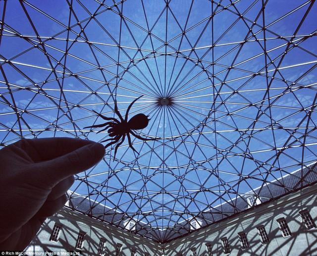 Trần nhà từ những thanh kim loại đan nhau ở bảo tàng hàng hải Maritime Museum ở Luân Đôn đã trở thành một chiếc mạng nhện hoàn hảo.