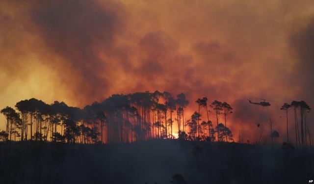 Máy bay trực thăng thả bom nước để chữa cháy tại khu rừng Tokai Forest gần thành phố Cape Town, Nam Phi.