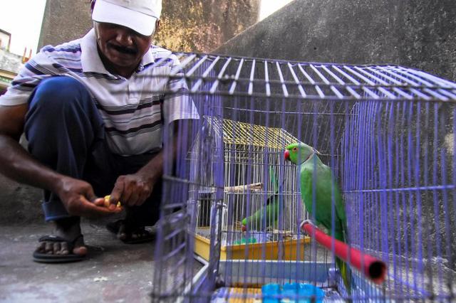 Ông Sekhar với những con vẹt mỏ dài