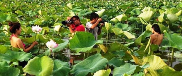 Mùa chụp mẫu nude tại hồ sen Hà Nội Ảnh đã được tác giả đưa trên mạng.