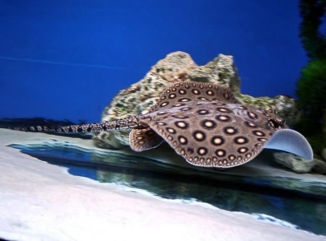Trọn bộ ảnh rực rỡ hoa văn của những loài cá sam đẹp nhất 5