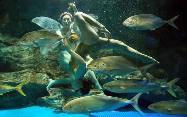 Vũ công biểu diễn múa ballet dưới nước ở Seoul, Hàn Quốc.