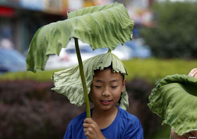Cậu bé dùng lá sen làm mũ trong một ngày nắng nóng tại thành phố Bắc Kinh, Trung Quốc.