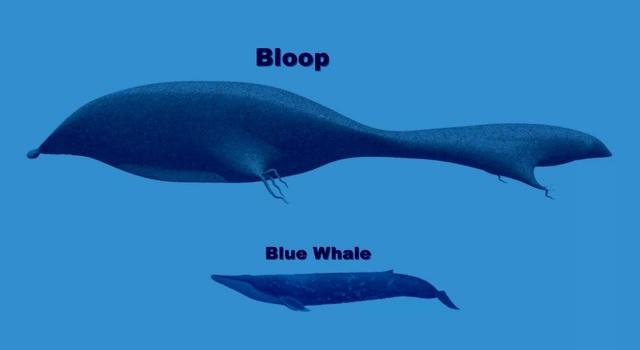 Âm thanh của Cá voi xanh truyền đi chỉ bằng 1/3 của The Bloop