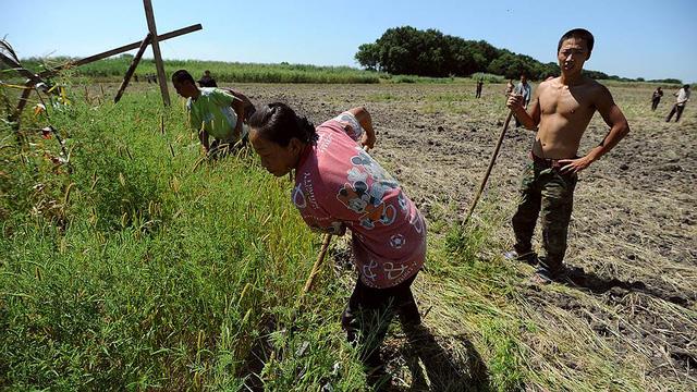Dân Trung Quốc đang làm nông nghiệp ở Nga
