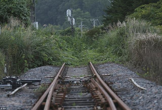 Đường sắt han rỉ, bị cỏ dại bao phủ không thể sử dụng được.