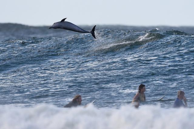 Cá heo nhảy qua một con sóng ở ngoài khơi Bờ Biển Vàng, Australia.