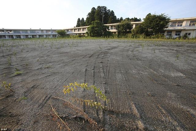 Một trường học bị cỏ dại bao phủ và sẽ còn đóng cửa trong ít nhất 2 năm tới.