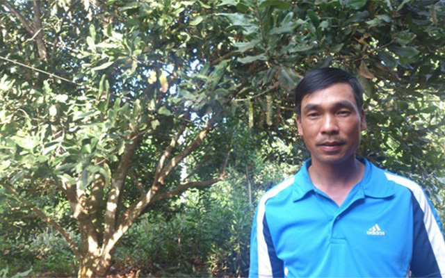 """""""Từ đầu vụ, thương lái đã đặt tiền mua. Hái được bao nhiêu, bán hết bấy nhiêu"""", anh Đinh Kim Thu (thôn Lộc Xuân, xã Phú Lộc huyện Krông Năng, Đắc Lắc) nói. Năm vừa rồi, vườn mắc-ca 10 tuổi với khoảng 100 cây trên diện tích 1 ha của gia đình anh mang về doanh thu 300 triệu đồng (chi phí chăm sóc chiếm khoảng 1/10 doanh thu), với 1,8 tấn quả."""